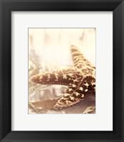 Seashore Starfish Framed Print