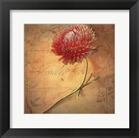 Framed Little Strawflower