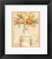 Framed Lovely Daffodil
