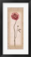 Framed Blossom II Ranunculus