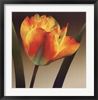 Framed Flame Tulip II