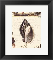 Framed Coquilles II