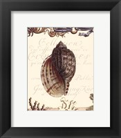 Framed Coquilles III