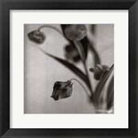 Framed Sandersonia I