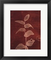 Framed Leaf Study IV