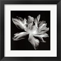 Framed Radiant Tulip I