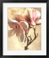 Framed Pink Magnolia I