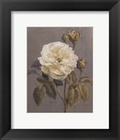 Framed Heirloom White Rose