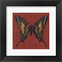Cranberry Butterfly Framed Print