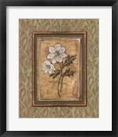 Peaceful Flowers III Framed Print