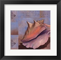 Sanibel Conch Framed Print
