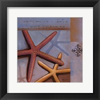 Sanibel Starfish Framed Print