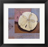Sanibel Sand Dollar Framed Print