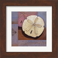 Framed Sanibel Sand Dollar - Mini