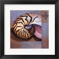 Framed Sanibel Nautilus