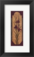Framed Greek Iris I - Petite