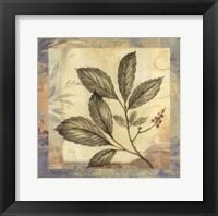 Leaf Botanicals III Framed Print