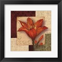 Bella Donna IV Framed Print