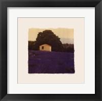 Framed Lavender Country - Mini