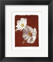 White Cosmos II - Mini Framed Print