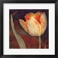 Dusk Tulip II Framed Print