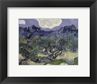 Framed Olive Trees, 1889
