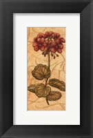 Framed Red Passion Geranium - Petite