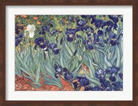 Framed Irises, Saint-Remy, c.1889