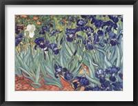 Irises, Saint-Remy, c.1889 Framed Print