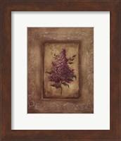 Framed Savin Lilac - Mini