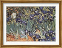 Framed Irises in the Garden, Saint-Remy, c.1889