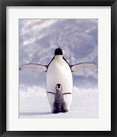 Framed Penguin and Chick
