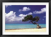 Framed Caribbean Zen Moment