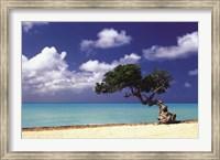 Framed Caribbean Zen Moment