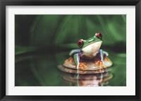 Framed Red-Eyed Tree Frog