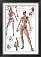 Framed Skeletal System