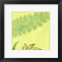 Framed Feather Leaf