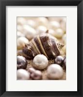 Sea Jewels II Framed Print