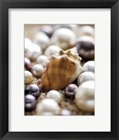 Sea Jewels III Framed Print