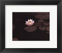 Framed Meandering Lily II