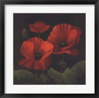 Framed Vibrant Red Poppies I