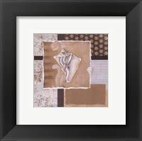 Framed Shell Collage III