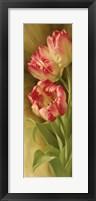 Framed Spring's Parrot Tulip II