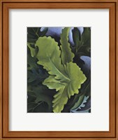 Framed Green Oak Leaves