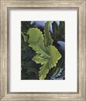 Framed Green Oak Leaves