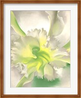 Framed Orchid