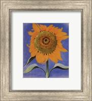 Framed Sunflower, New Mexico, 1935