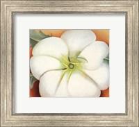 Framed White Flower on Red Earth, No. 1
