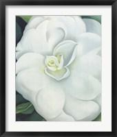 Framed White Camellia