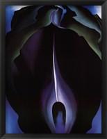 Framed Jack-in-the-Pulpit No. IV